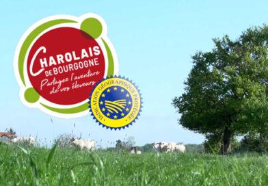 Charolais de Bourgogne