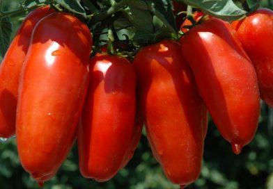 Pomodoro S. Marzano dell'Agro Sarnese-Nocerino
